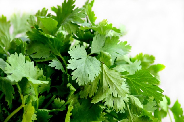 cilantro_herbs_food_green_cuisine_dish_parsley_fresh-638070.jpg!d